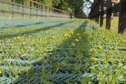 Grass reinforcement mesh
