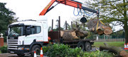 Looking for experienced Tree Surgeons in Middlesex?