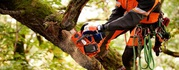 Professional Tree Felling Services in Bournemouth