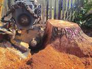 Professional Tree Stump Removal Services in Christchurch