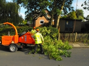 Your Local Qualified Tree Surgeons in Bournemouth