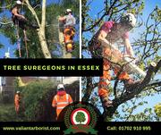 Tree Surgeons in Essex | Valiant Arborist Ltd.